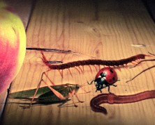 Sorpresas animadas – Jim y el durazno gigante